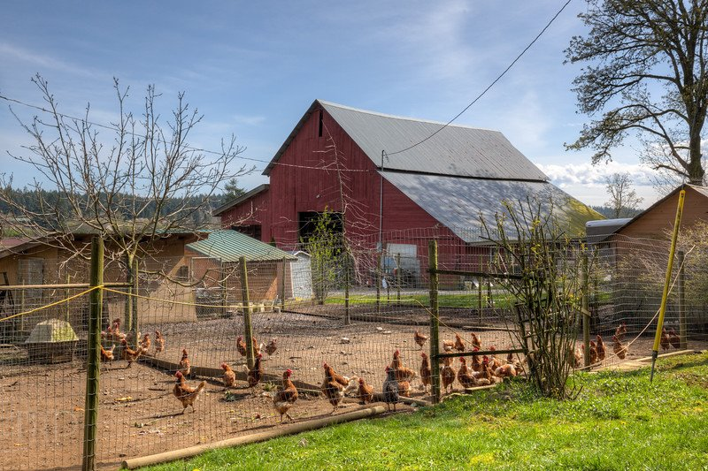 #Barn and #Chickens - Yellow Point, Vancouver Island, British Columbia, #Canada #photography #red #farm https://t.co/bmFbqvGaEB