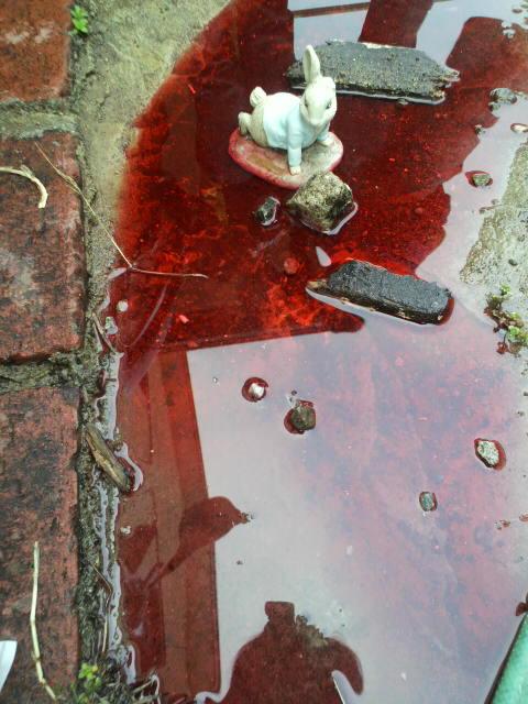 昨日、子供らが食紅を混ぜると赤いシャボン玉ができるのか、という実験をやっていた。庭はまるで殺人現場のようになり、ピーターラビットが血の池地獄に落とされた https://t.co/l9uRYCPvxn