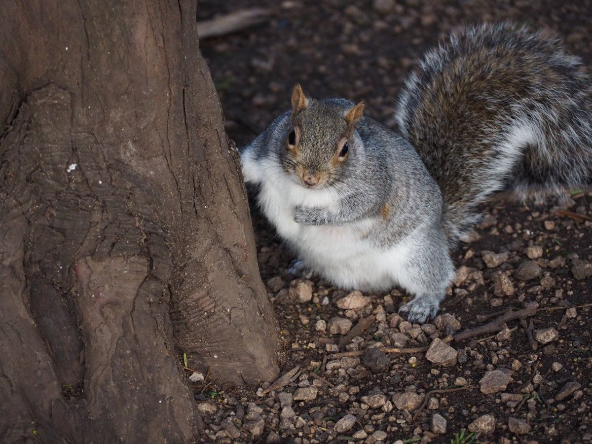 Have you noticed the #FatSquirrels around Uni Park Campus? Let them know that @UoNSport are building them a gym!