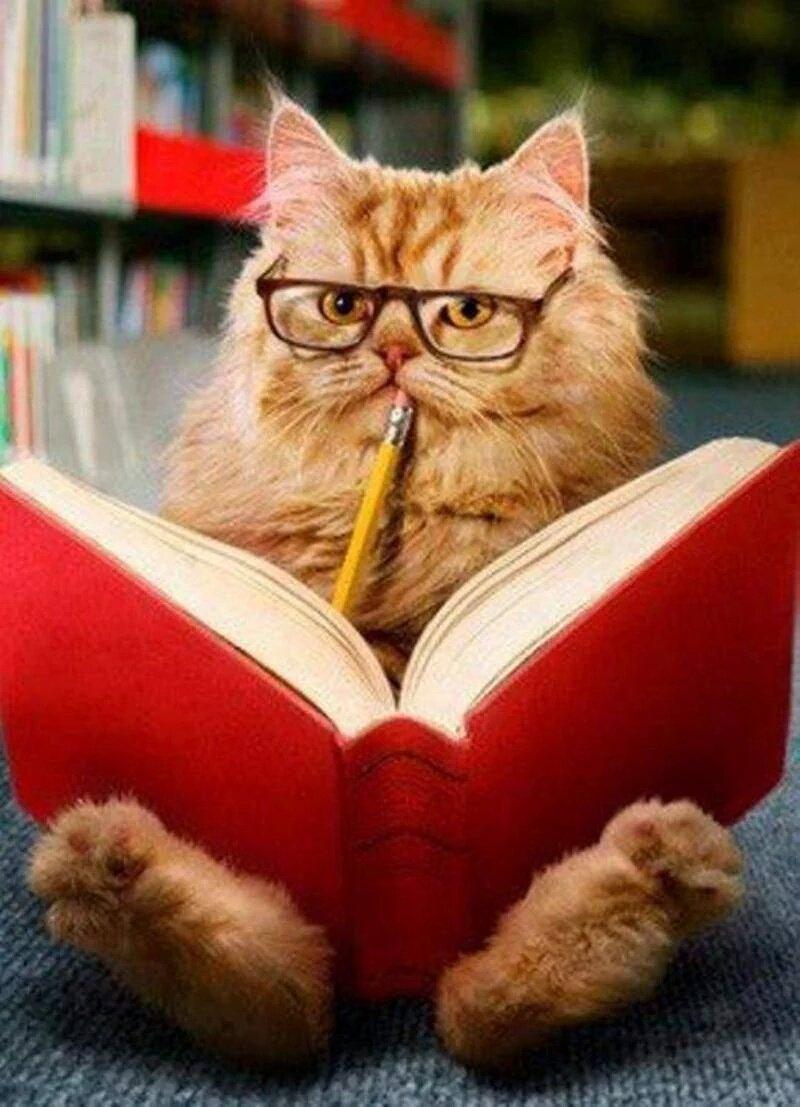 Кот ученый в очках картинки