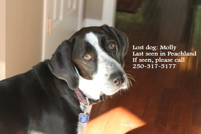 #Peachland residents: This is Molly. Last seen Mar. 19 in Princeton/Vernon Avenue area. She requires meds. https://t.co/aBW71i4son