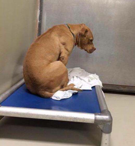 RESCUE NEEDED PLEASE xxxx Dog Just Stares At Wall After His Rescue Fell Through https://t.co/M7ut2gMo27 https://t.co/TjE829ztX0