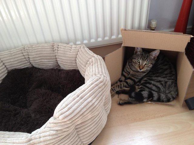【ご主人の好意を・・・】ワザとやっているとしか思えない猫の行動12選  1)ベッドは硬めが好み