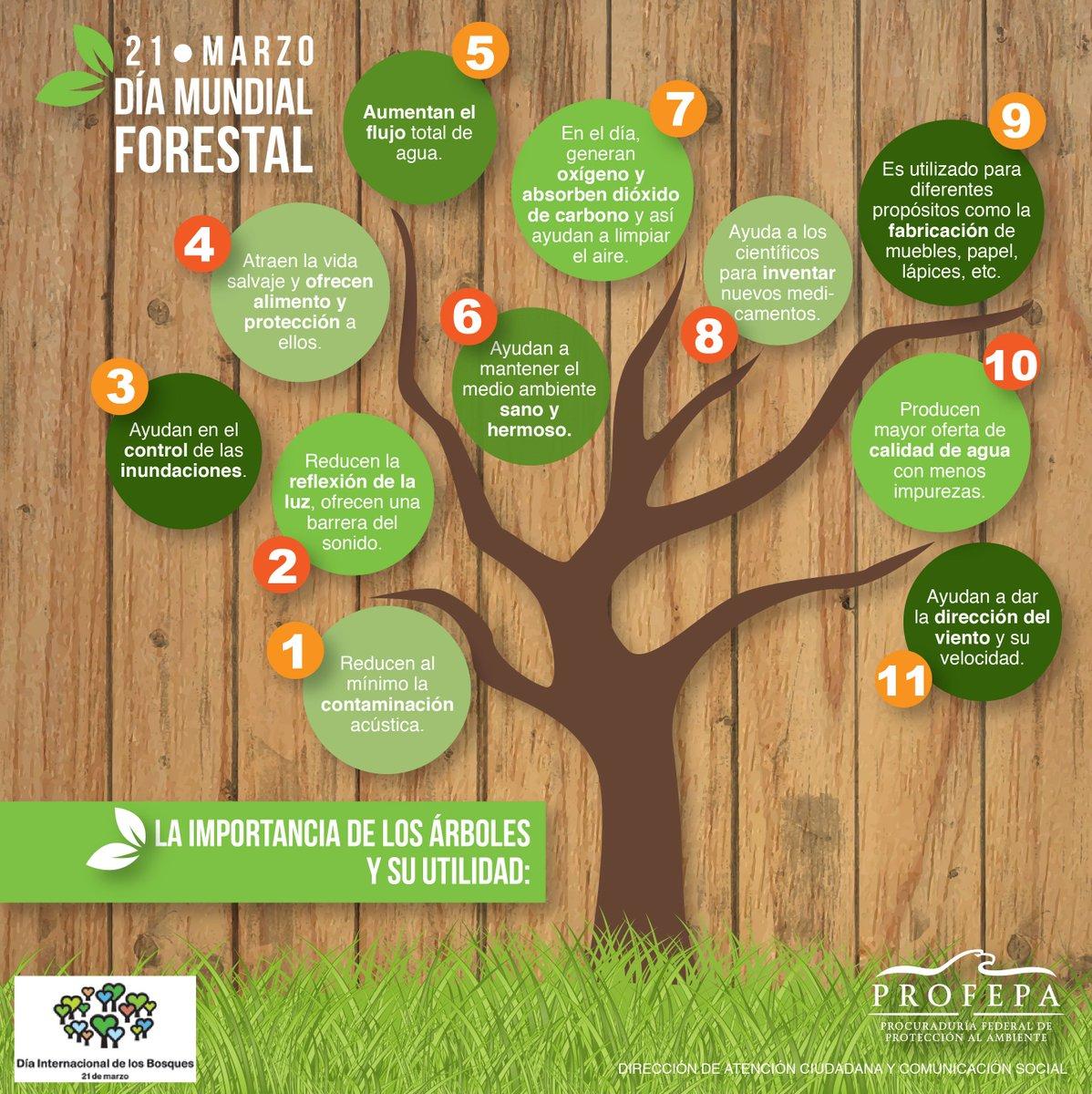 Profepa on twitter la importancia de los rboles y su for Importancia de los viveros forestales