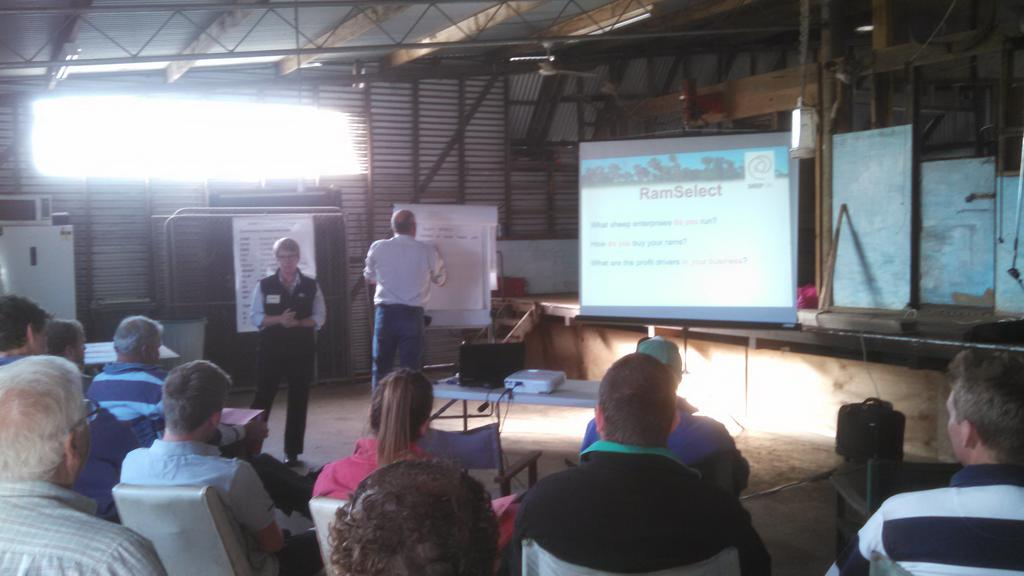 Sheep CRC ram select workshop at Cashmore Park. Learning to add further $ per Ha to prime lamb businesses. JK