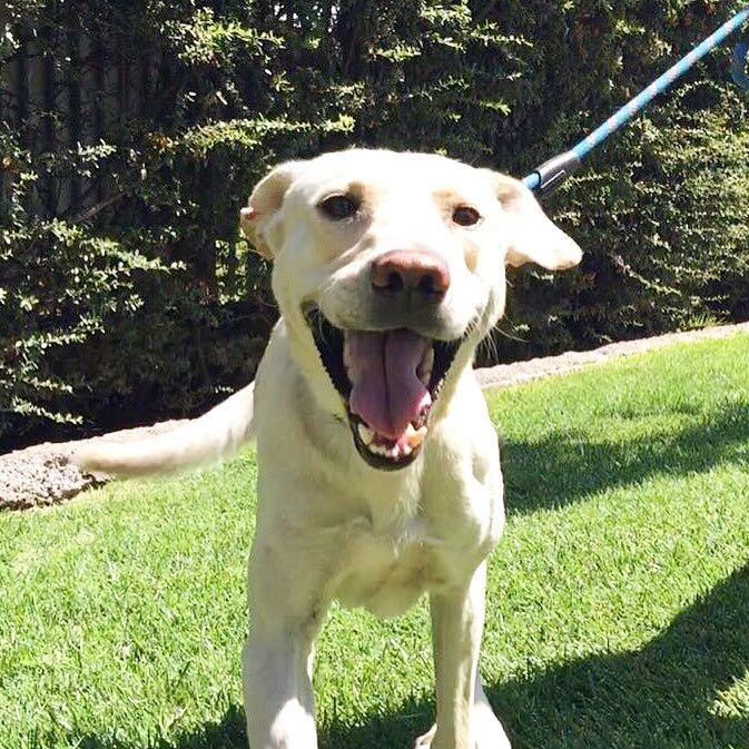 Rocky busca familia, año y medio, castrado, ama los cariños, solo para perro único llamar al +56966088184 https://t.co/fW2Sth1Fd1