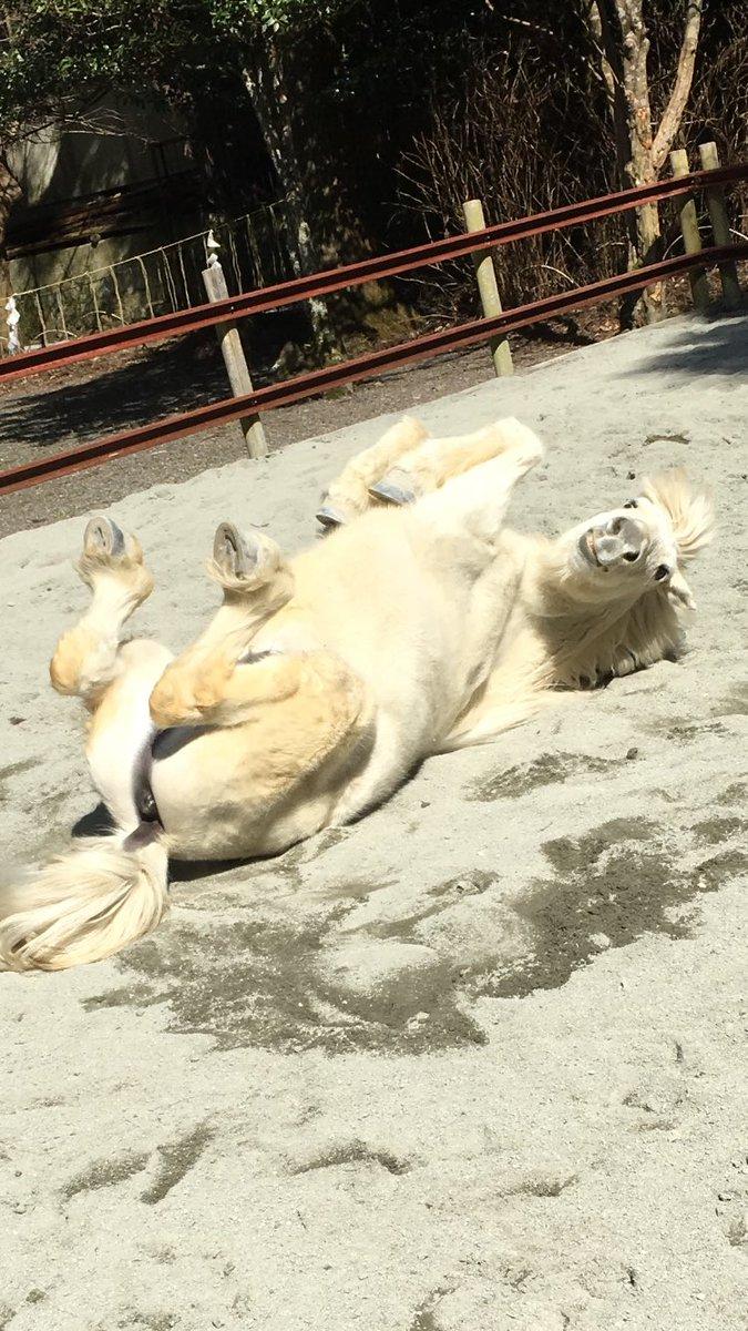 奈良の山奥にある神社で飼われている神様の馬(神様感ゼロ)