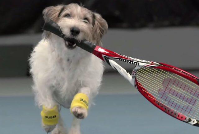 top dog tennis league softball betting