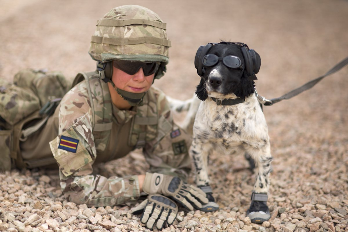 British Army On Twitter Military