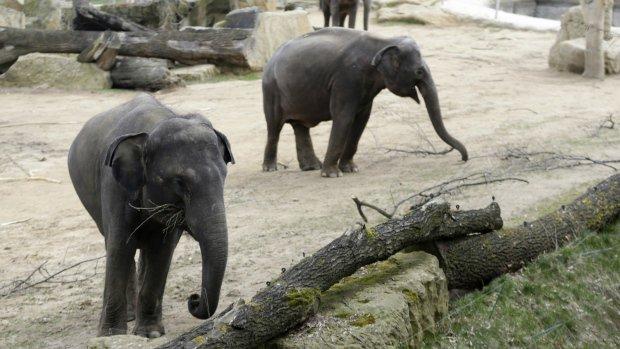 Elephant Dung Paper: Uno Zoo produrrà carta con sterco di elefante