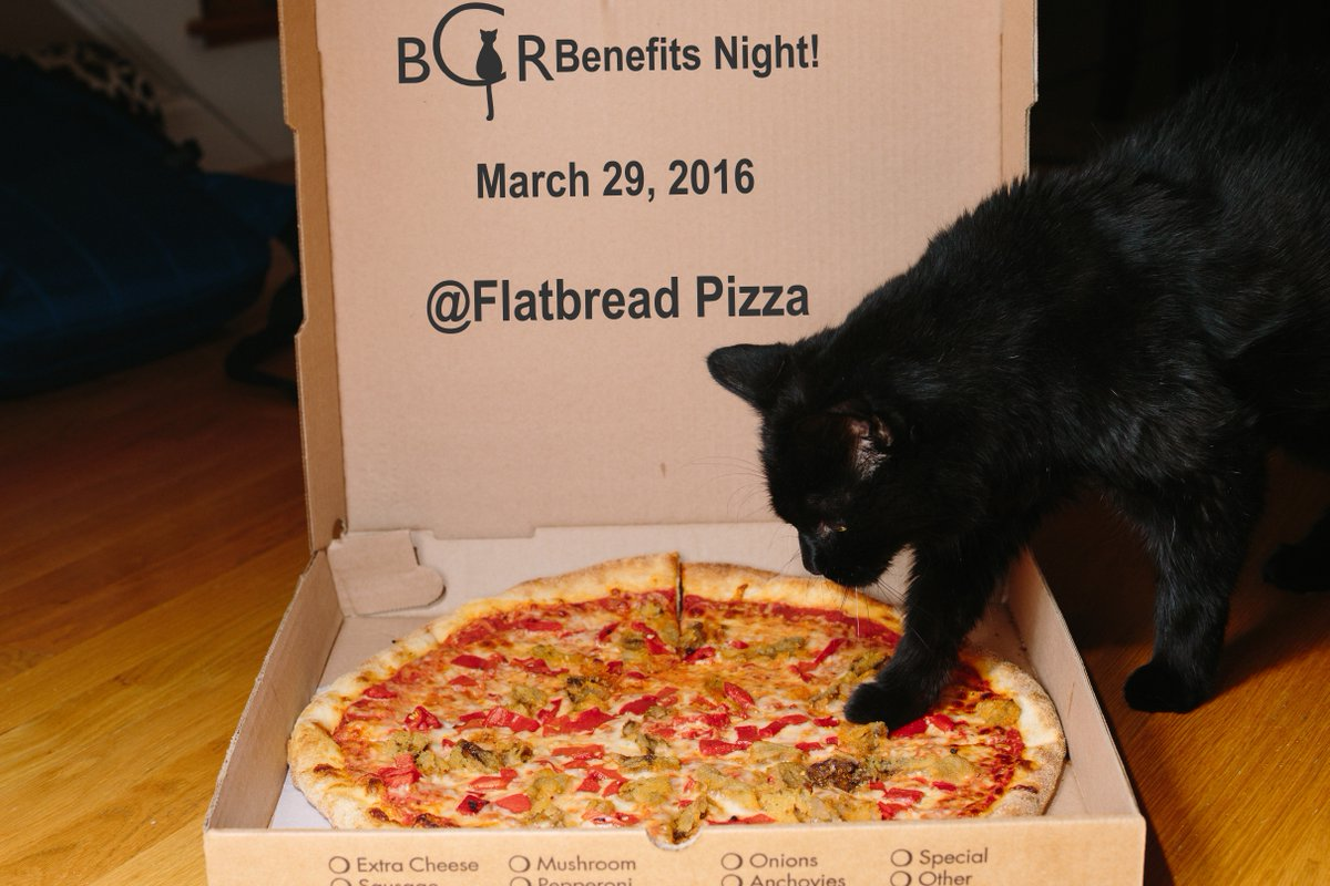 black cat rescue on twitter larry says eat pizza help cats
