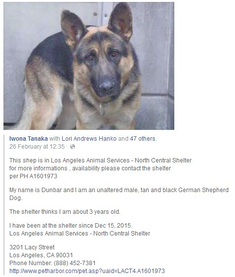 Freja Petersen On Twitter Share Dunbar A1601973 Los Angeles Animal