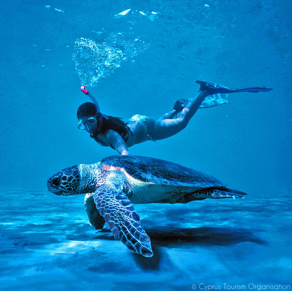 Cyprus is one of only a few places in the world where Green Turtles & Loggerhead Turtles nest. #nature #animals https://t.co/99pXK6wSbb