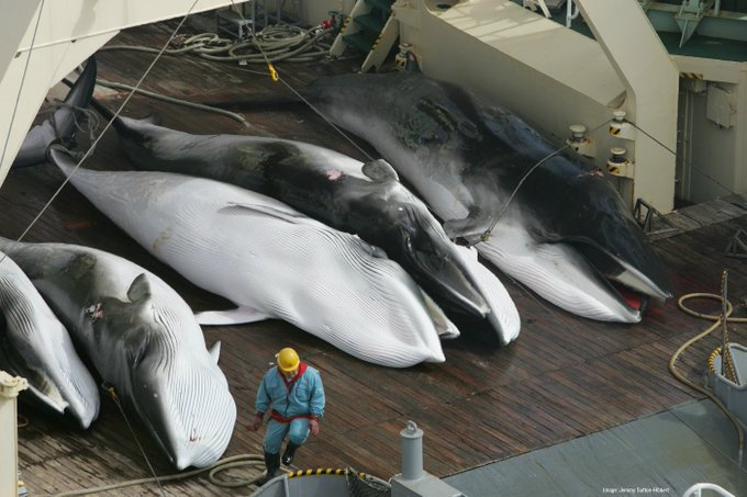 Seaspiracy: Should marine life be treated as seafood or as wildlife?