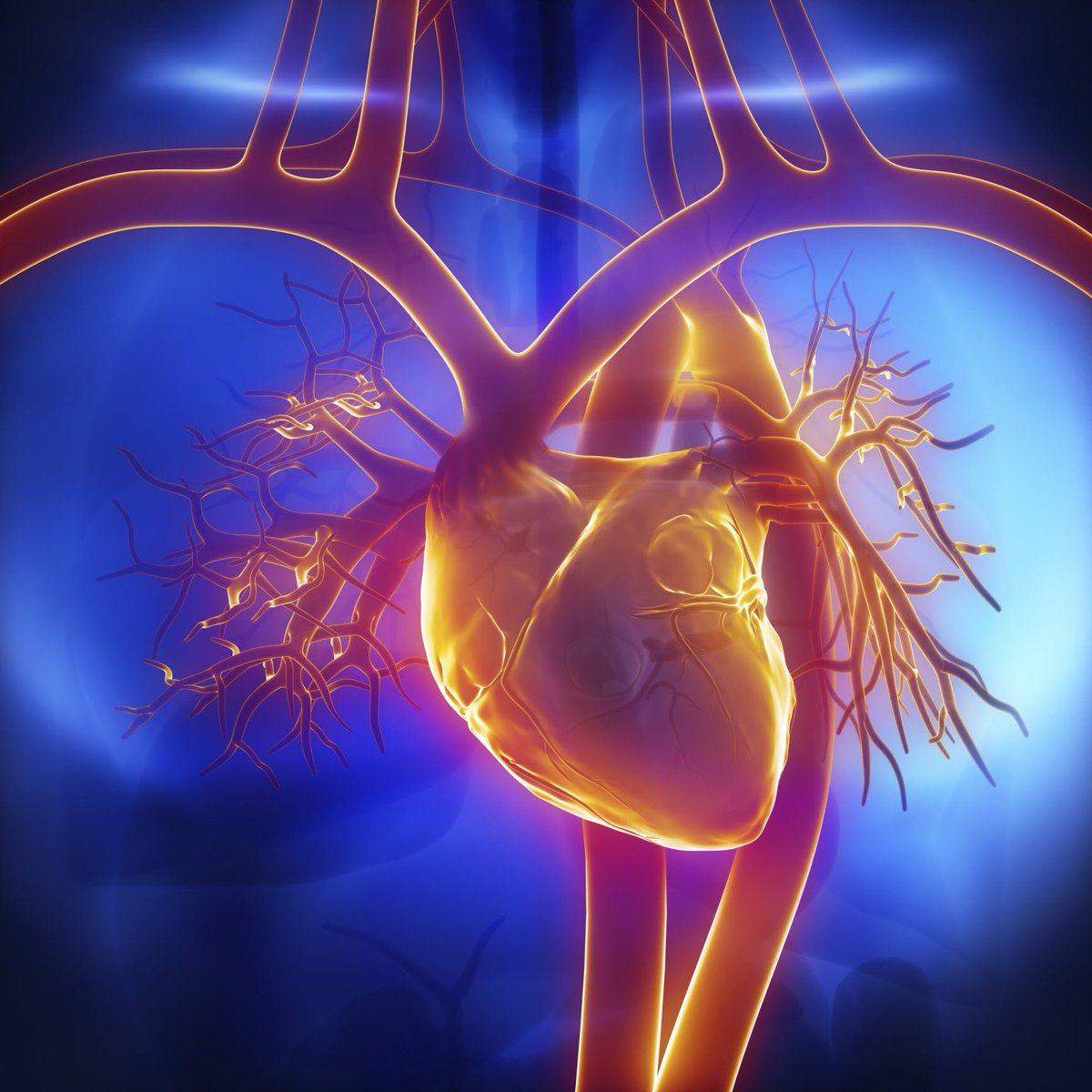Wow: Each person has over 60,000 miles of blood vessels, enough to circumnavigate the world twice #heart #fact https://t.co/ulAIZZmqVX