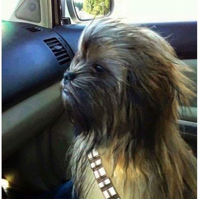 I think I found our next family dog. #whatbreedisthis https://t.co/valkjfdC3h