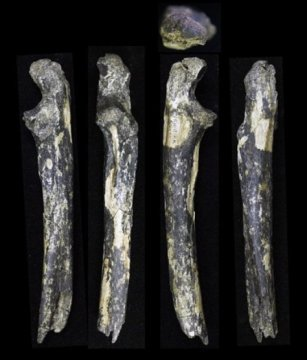 New Australopithecus afarensis fossils from Kenya, east of the Rift Valley! https://t.co/mnABMCr8pz https://t.co/LZDIscey3t