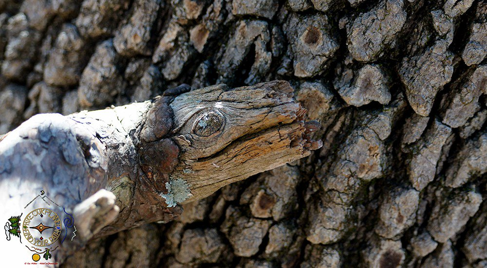 The #Art Of #Nature #Forest #Serpent #Hiking #Photography #optoutside #whywehike #hikeourplanet https://t.co/ldFBUei3i4 https://t.co/dNTXGFY0va