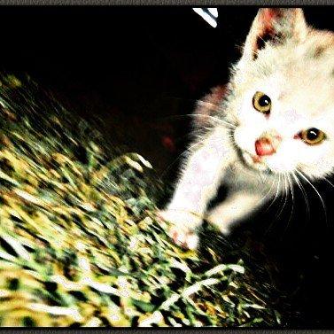 Cat Lovers  #instalike #instamoment #instacat #instaanimals #likeforfollow #likers #likes #like4like #like4follo… <br>http://pic.twitter.com/x3Lm0A8Ui5