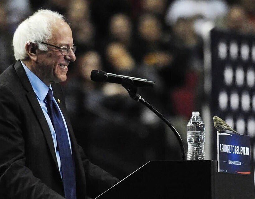 Politics: @realDonaldTrump = support from fear/violence @SenSanders = support from Mother Nature #BirdieSanders https://t.co/9j10gyGf5o