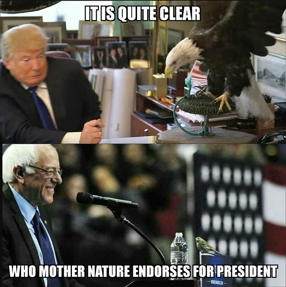 Who birds endorse #BirdieSanders #AnyoneButTrump https://t.co/c4KqkfdrJ0