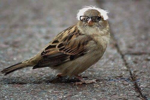 #FeelTheBird am I right? #BirdieSanders https://t.co/FbiaWz4LIw