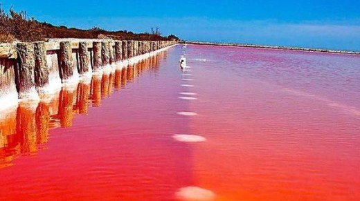 Image result for Pink Lake ออสเตรเลีย