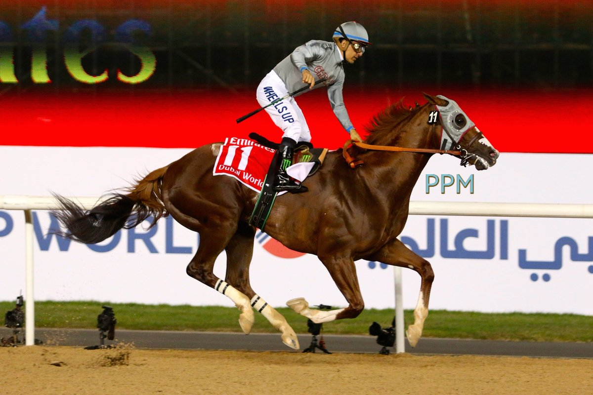 California Chrome – Dubai World Cup 2016
