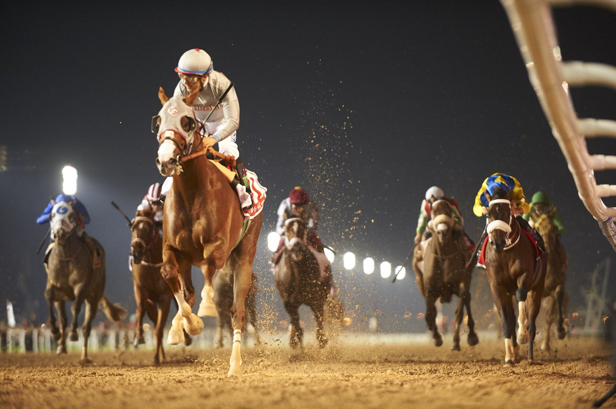 California Chrome - Dubai World Cup