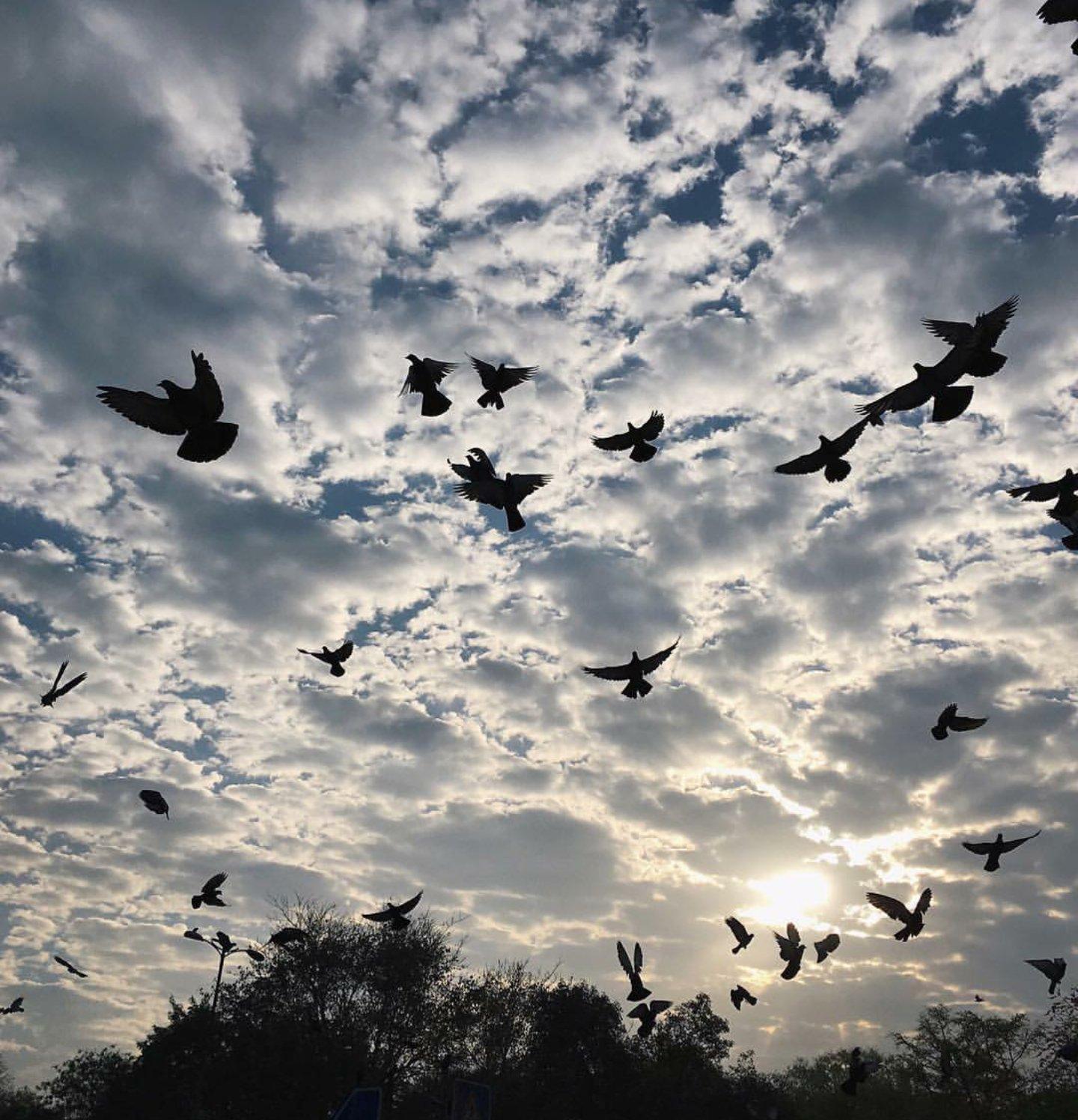 сложилось, фото небо птицы облака головные