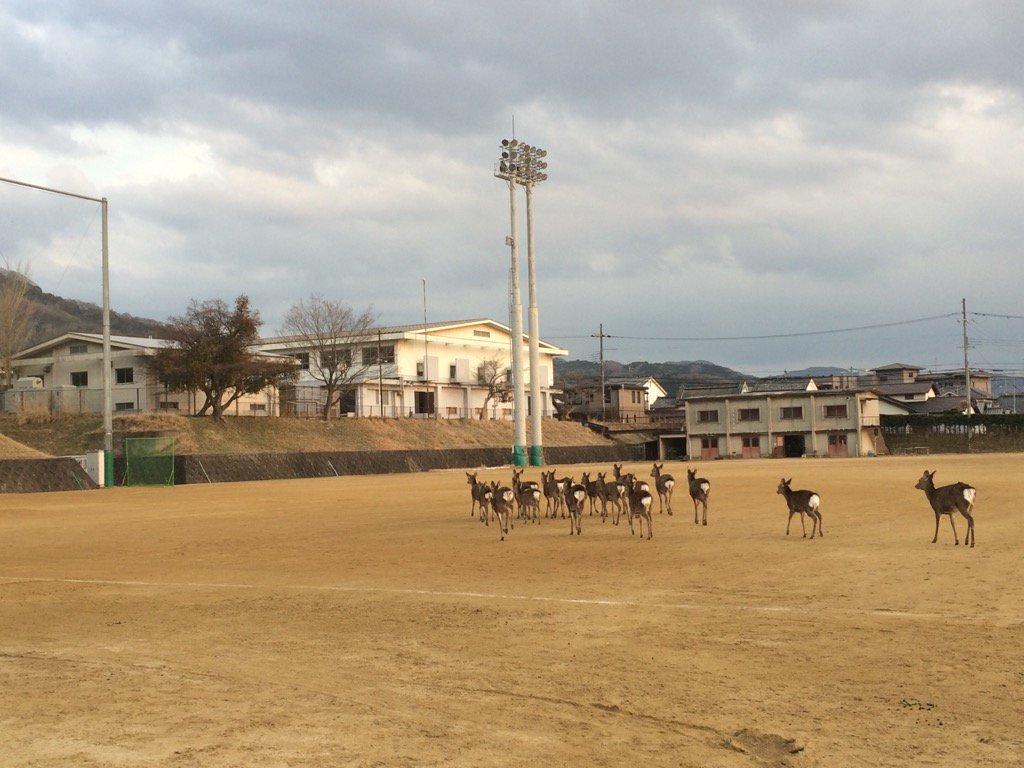 奈良教育大学のグラウンドを鹿が疾走している。すごい。 pic.twitter.com/VuM8Cw440l