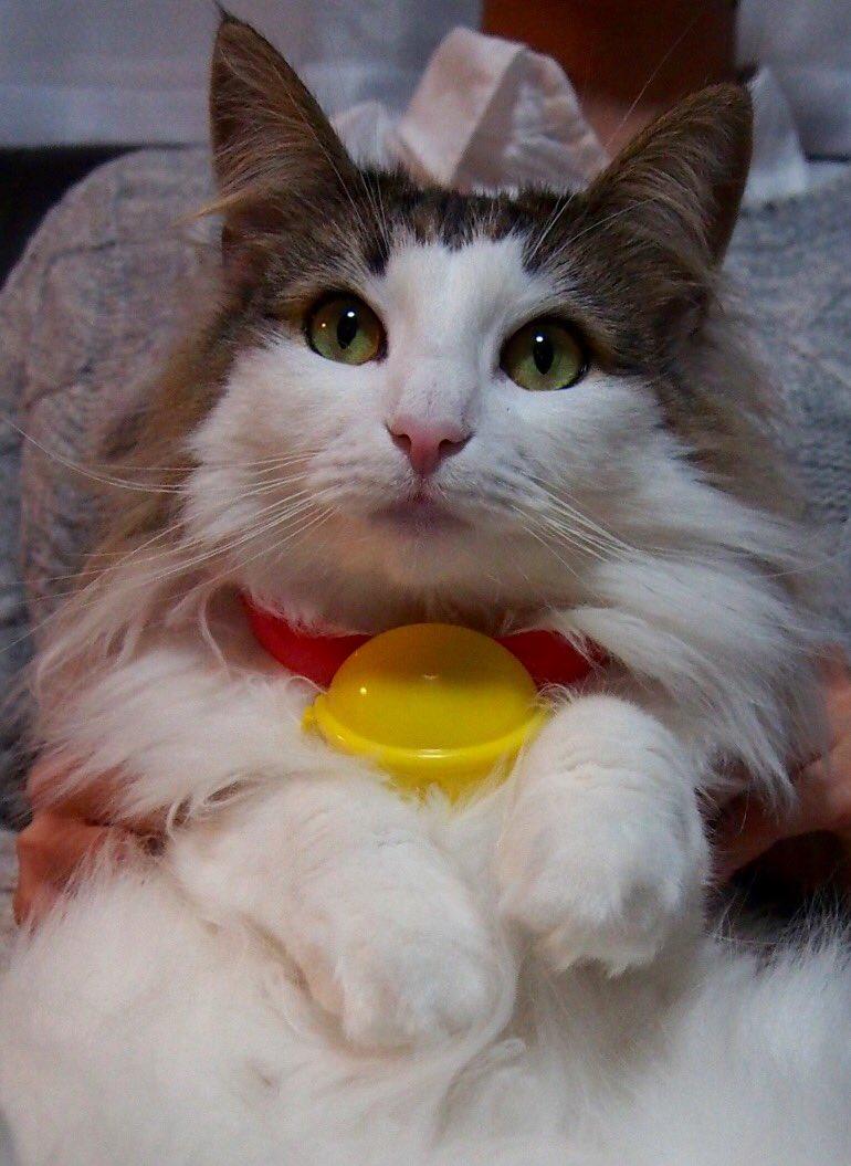 みなさん、これはマクドナルドのハッピーセットでゲットできますよ♡おうちのにゃんこ、わんこがドラえもんに大変身(´▽`)/とってもかわいいので、明日は朝からマクドナルドへGO!笑#マクドナルド #ハッピーセット pic.twitter.com/y04clkFlrT