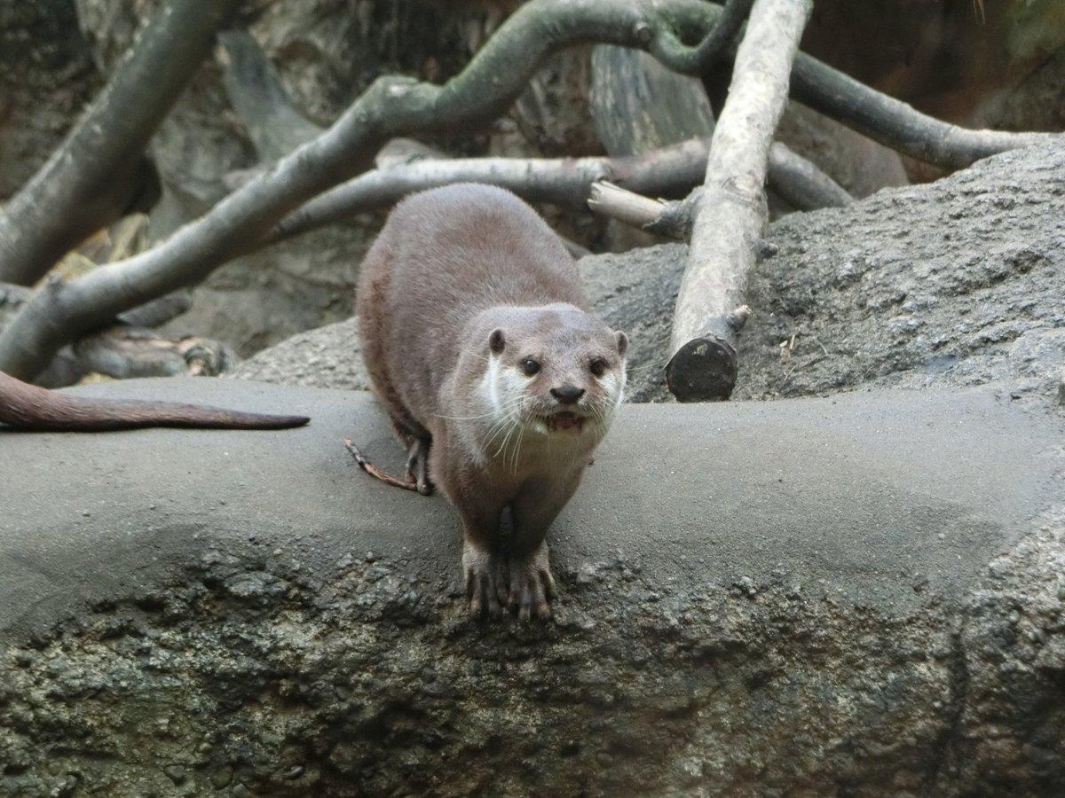 おはようございます\(^o^)/本日、上野動物園は春休み期間ということで、月曜日ですが開園しています。(カワ)ウソではなく、ホントの話です(笑) pic.twitter.com/Vcl3Sp40jw