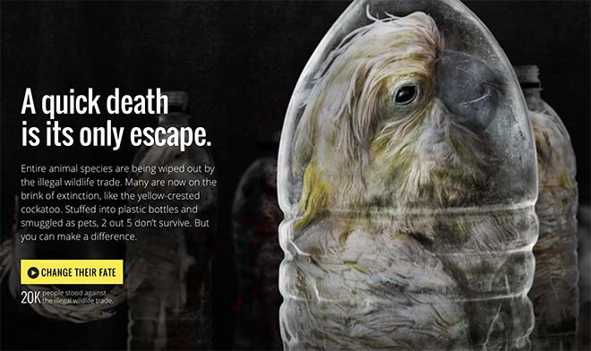 Change Their Fate tackling illegal wildlife trade @tweetWRS @POSSIBLE with digital campaign https://t.co/hLgz230kqC https://t.co/oA6TDnkCbL