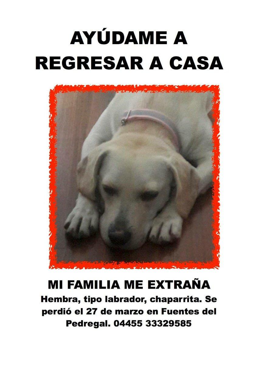Ayuden a encontrar a la perrita de @PamCerdeira se perdió por Fuentes del Pedregal al sur de CDMX @RescateAnimal https://t.co/QOCpqJ9Zu1