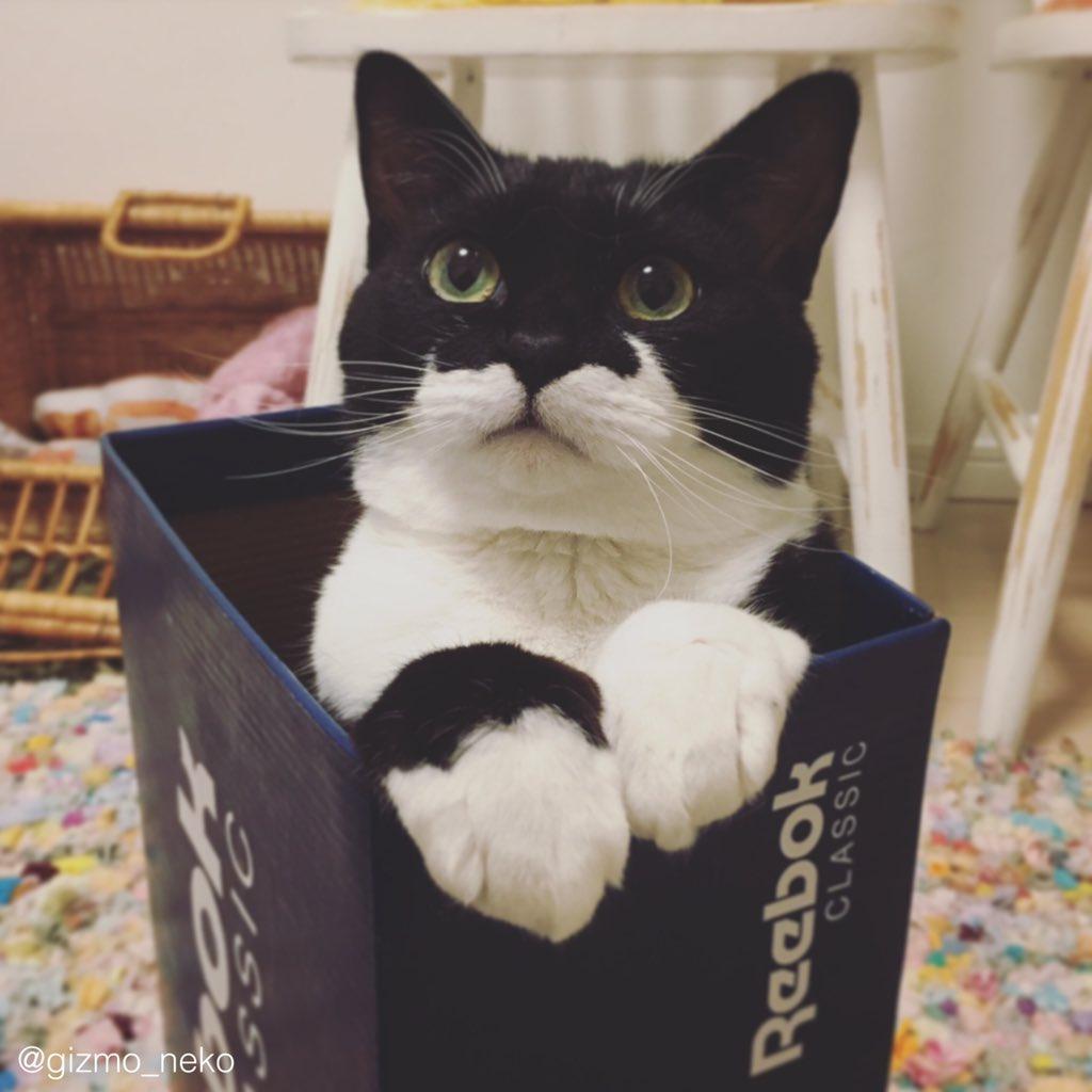その箱、いい加減捨てたいのだけど… pic.twitter.com/R73BojWgAz
