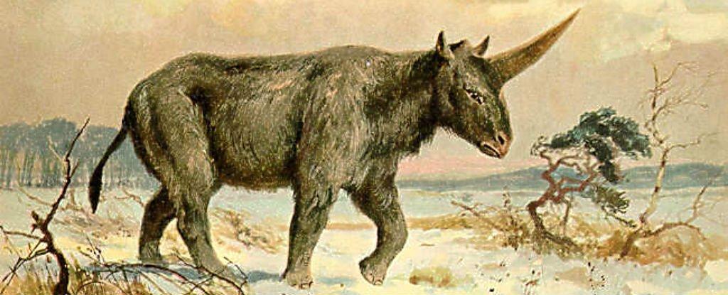 extinct siberian unicorn may have lived alongside humans fossil