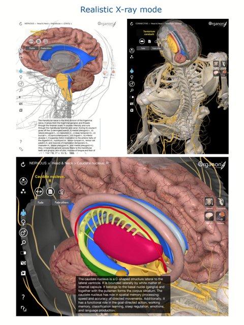 3d Organon Anatomy On Twitter Release Fancy Learning