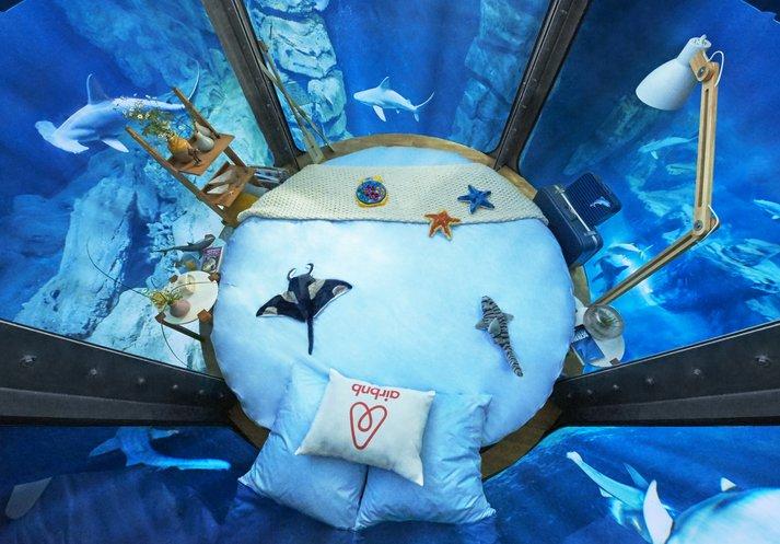 Concorso Airbnb: dormire in una camera da letto sommersa con 35 squali nell'Acquario di Parigi