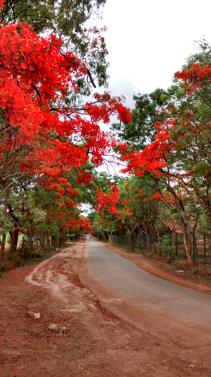 A bend in the road #Bengaluru https://t.co/G8FRBmf3dR