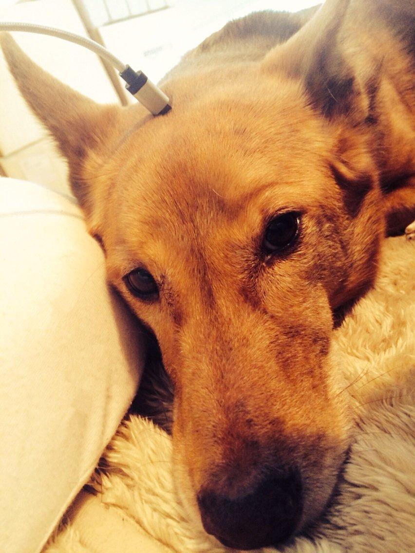 起きたら隣で犬が充電されてた pic.twitter.com/6KYM9B4JoU