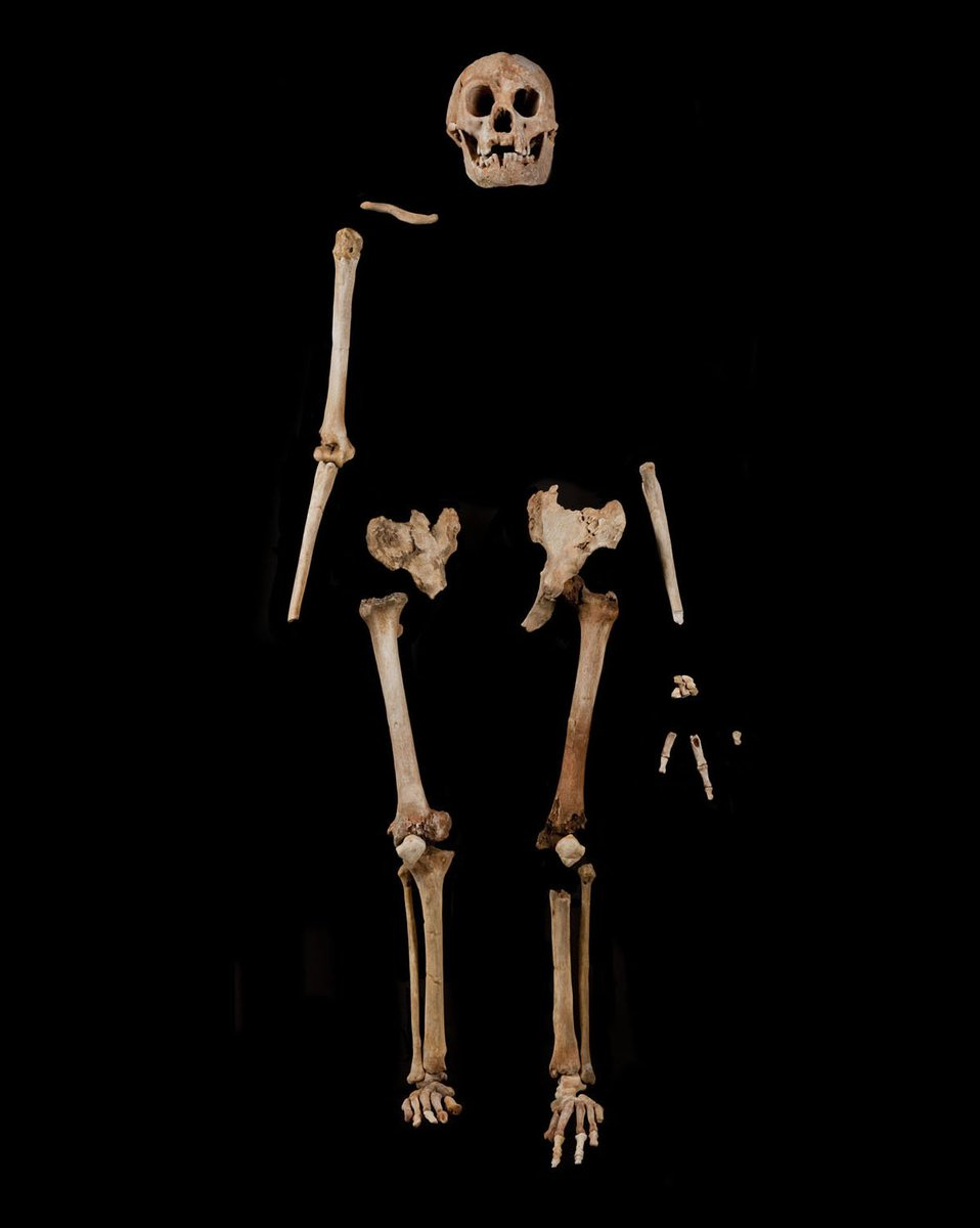 News flash! Homo floresiensis #hobbit fossils now date to 100-60Ka, w/stone tools 190-50Ka. https://t.co/xkiWrE5Z8L https://t.co/Y9mElf1IUa