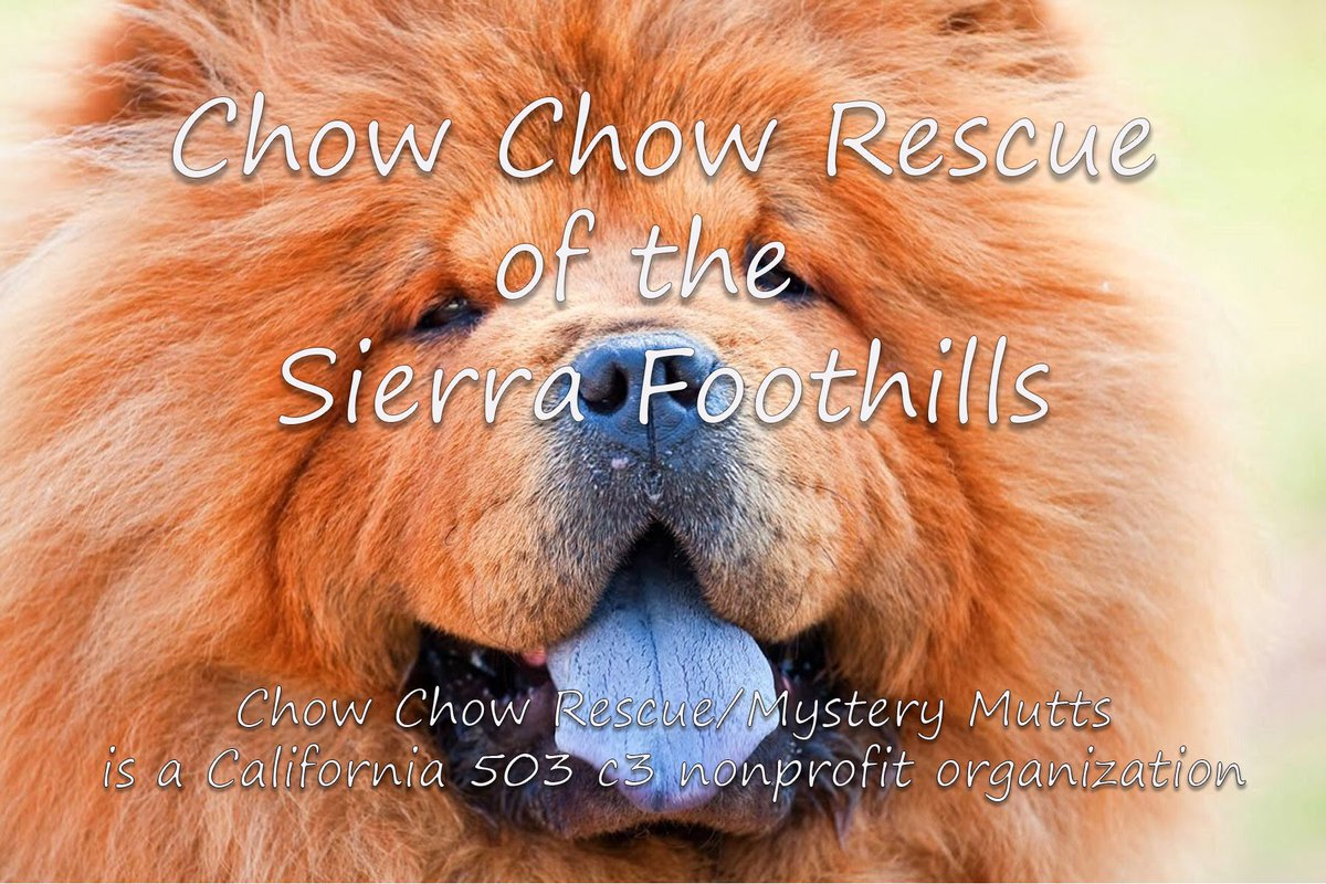 Chow Chow Rescue (@chow_rescue) | Twitter