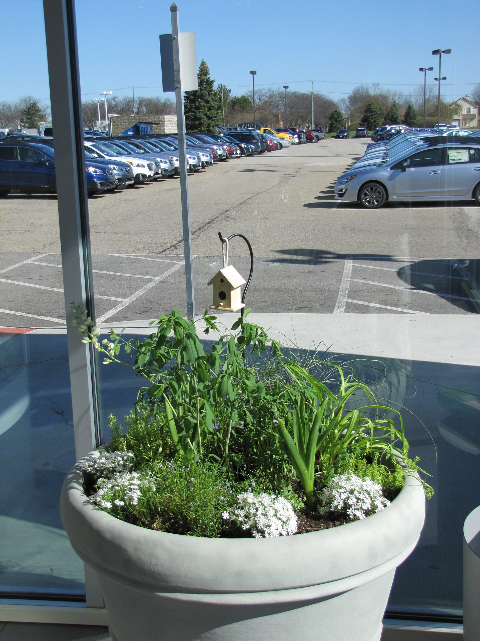 """Byers Subaru Dublin on Twitter """"Look at our butterfly supportive"""