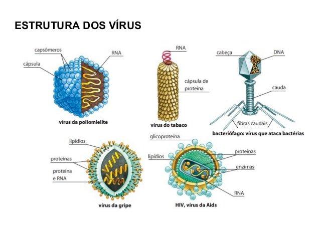 Los bacteriófagos son parte del diverso y fascinante mundo de los virus #microMOOCSEM https://t.co/LS4teatKpB