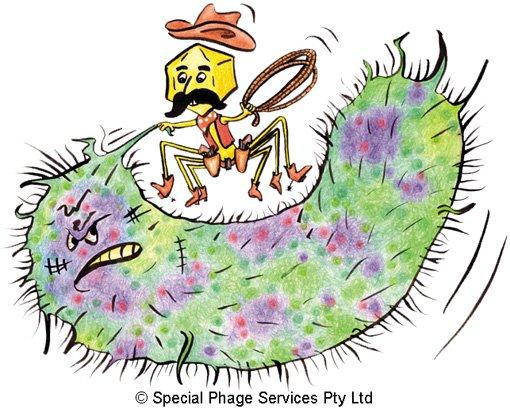 Para multiplicarse, un bacteriófago debe tomar el mando de su célula huésped y obligarla a replicarlo #microMOOCSEM https://t.co/MZI0kYw8HZ
