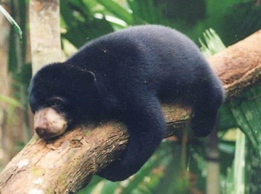 4800 Koleksi Gambar Hewan Yang Ada Di Hutan Gratis Terbaik