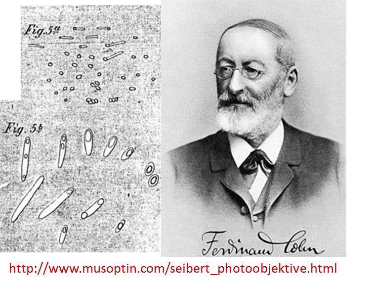 Ferdinand Cohn (1828–1898) clasificación d las bacterias y descubre las esporas, formas d resistencia #microMOOCSEM https://t.co/v03pcgOTkk