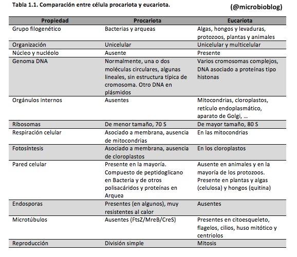 Comparación entre célula procariota y eucariota #microMOOCSEM https://t.co/sNsBK8qJ5G