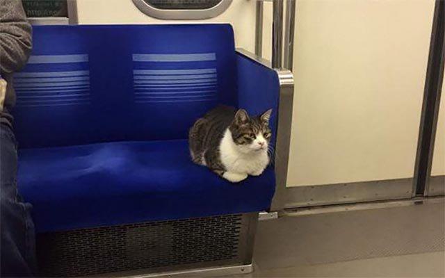 ネコは西武池袋線の常連 会えたらラッキーなカワイすぎる珍客 grapee.jp/162782 #grape #ねこ まるでジブリの「耳をすませば」みたい♪ pic.twitter.com/q4h1yzRrwc